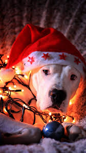 Best dog wallpaper, desktop background for any computer, laptop, tablet and phone. Merry Christmas Wallpaper By Rewsss2 D5 Free On Zedge