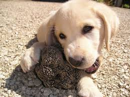 there are several insutions that offer obence and hunting dog training but it is best to have train your puppy yourself given that you have
