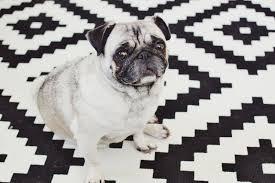 black and white geometric rug. a sad-looking black and white dog sitting on geometric rug. rug