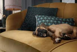 pets and sofas your vital cleaning
