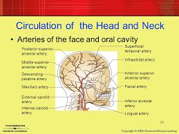 arteries of the face 7 head and neck anatomy 2 landmarks of the face and oral cavity
