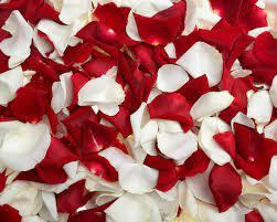 Free download Flowers Rose Petals ...