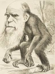 alfred wallace on evolution credit where due dr dud s dicta charles darwin as an ape 1871