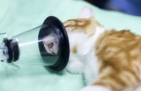 Why does treatment for pets cost so much? - BBC News