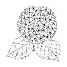Hortensia Vectoren Illustraties En Clipart 123rf