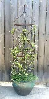 Evergreen Potted Plants For Deck  Flowers Flower Plants Climbing Wall Climbing Plants In Pots