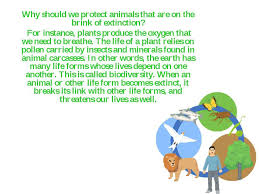 do animals have rights essay do animals have rights essay