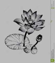 20+ [ Flower On A Lily Pad ] | Water Lily Flowers On Pond Black ...