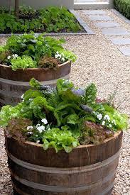 half barrel garden tubs used oak barrels for two wooden pots unique wine planters nz wine barrel planters oak