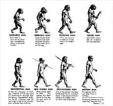 the evolution of evolution dickinson college wiki evolution of man jpg