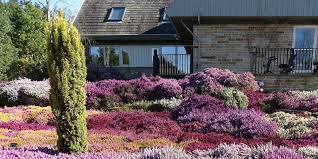 the best way to create a rock garden on a sunny slope