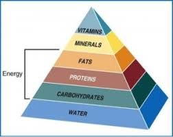 Image result for Major Nutrients in Food