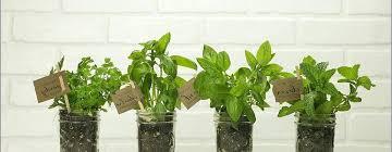 starter herb garden kit indoor herb garden starter kit herb garden starter kit outdoor herb garden