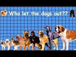 dog breed size chart size comparison of dog breeds youtube