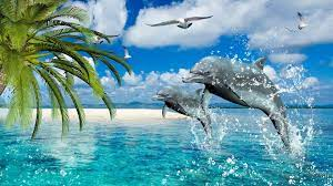 Amazing Dolphin Wallpapers - Top Free ...