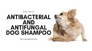 The Best Antibacterial And Antifungal Dog Shampoo In 2019
