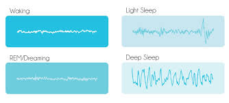 Ideal Sleep Cycle Chart Sleep Cycles Sonic Sleep Coach