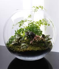 Terrariums Miniature Gardens   Terrariums fish bowl gardening   What's on  Jimmy B's mind