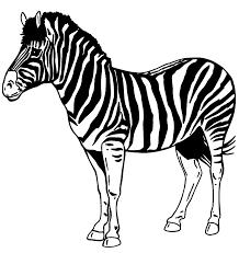 Zebre Disegni Di Colorare Da Smqzuvlpg J453arl