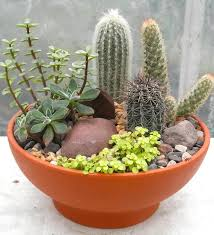 Small Picture How to Make a Succulent Dish Garden Step by Step Tutorial