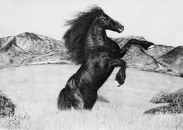 wild horse drawings in pencil. Modren Wild Black Horse Pencil Drawing Throughout Wild Drawings In L