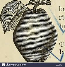 Iuly Size Chart 3 July 1898 Stock Photos 3 July 1898 Stock Images Alamy