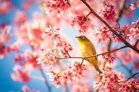 Image result for blossom