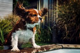 the 15 best dog ear cleaners reviews