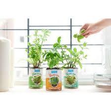 basil cilantro mint grow kit herb garden 3 pack