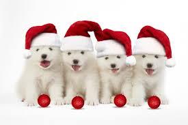 Joyeux Noël Sms Textes Humour Cartes De Vœux Tout Pour Un