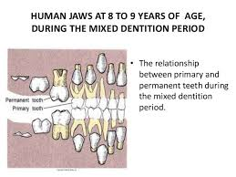Permanent Teeth Eruption Chart Deciduous And Permanent Teeth Eruption Time And Shedding