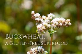 buckwheat benefits nutrition