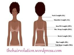 Natural Hair Growth Length Chart Www Bedowntowndaytona Com