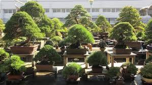 bonsai gardens. Bonsai Gardens In Japan