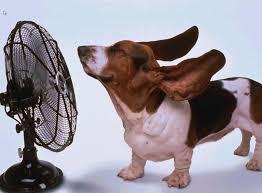 Lustige Tierbilder Tiere Lustige Tierbilder Hitze Lustig Und