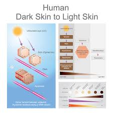 Skin Cancer Chart Stock Illustrations 11 Skin Cancer Chart