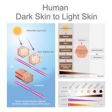 Skin Cancer Chart Skin Cancer Chart Stock Illustrations 11 Skin Cancer Chart