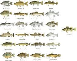 Freshwater Fish Types Freshwater Fish Fishing Chart
