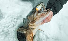 early ice walleye locations and tactics