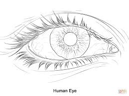 Small Picture Human Eye coloring page Free Printable Coloring Pages