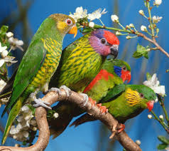 images of flowers and birds. Beautiful And Beautiful Flowers Parrots Birds In Images Of Flowers And Birds I
