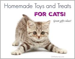 homemade toy and treat ideas for your kitty cats