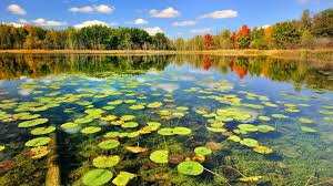 Pond Pond Wallpapers 41 Best Hd Images Of Pond High Definition Pond