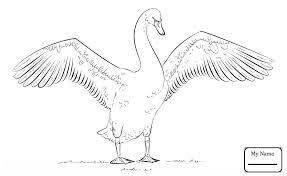 Small Picture coloring pages birds Swan Lake Near Castle coloring7com