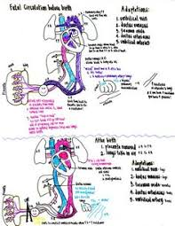 6 05 Fetal Circulation Chart 72 Best Fetal Circulation Images Student Midwife