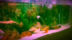 Fun Fish Tank Decorations Fast Fun And Easy Fish Tank Cleaning And Water Change Youtube