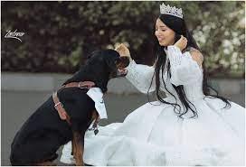 البلوغر المصرية هبة مبروك تتزوج كلبها.. هل يئست من الرجال