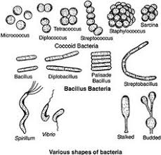72 Best Microbiology Images Microbiology Medical