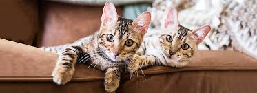 Stop Cat Scratching Furniture Prevention Tips