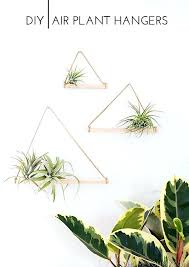 air plant hangers wall mount mounted holder